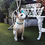 Foto Pet_Friendly_Destacada